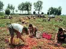 immigrati e settore alimentare