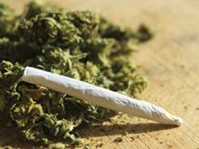 cannabis-social-club-barca