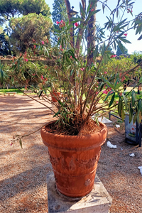 giardino aranci roma